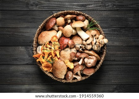 Different fresh wild mushrooms in wicker bowl on black wooden table, top view