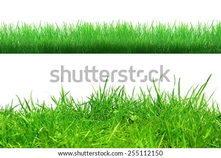 Different grass on the white background - Shutterstock ID 255112150