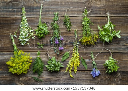 Different herbs from the garden on wooden table. Fresh herb on wood.