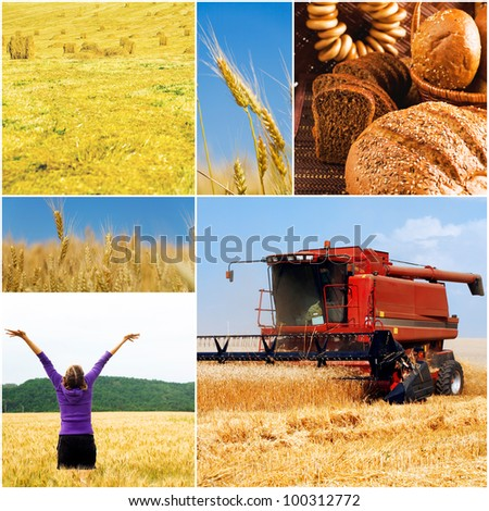 different images on the subject of summer and crop and harvesting