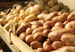 Different kinds of potato on market outdoors
