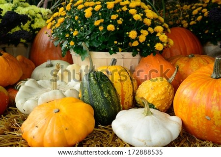 different kinds of pumpkin and squash in the harvest season #172888535