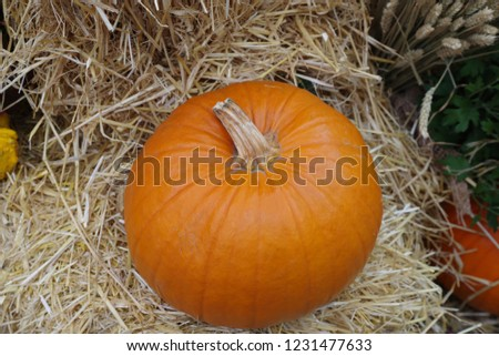 different kinds of pumpkins #1231477633