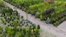 Different ornamental plants on the local farm to grow seedlings of trees and shrubs. A set of beautiful plants, a view from above