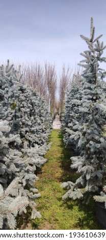 Different ornamental trees in greenhouse. Beautiful botanical garden in nature, outdoor. A corridor of sapling trees in Spring time Stok fotoğraf ©