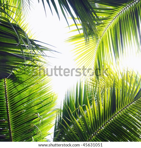 Different palm tree leaves in various green tones and shades