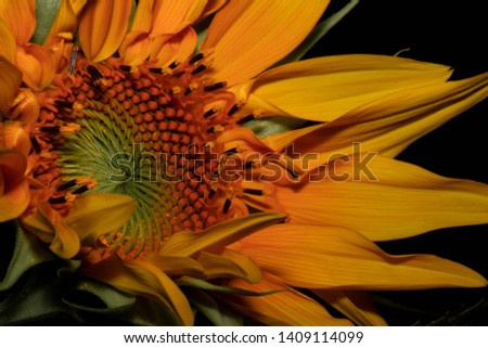Different perspectives of a beautiful sunflower. #1409114099