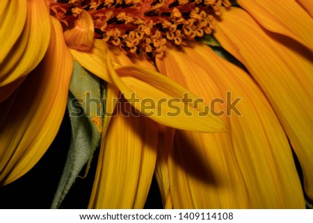 Different perspectives of a beautiful sunflower. #1409114108