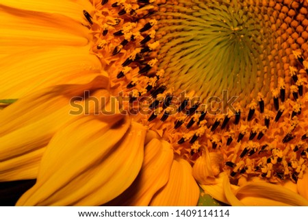 Different perspectives of a beautiful sunflower. #1409114114