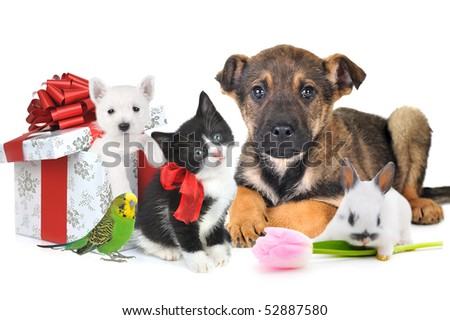 different pets with gift box and flower together