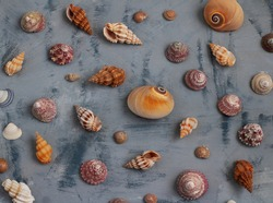 Different seashells on gray background