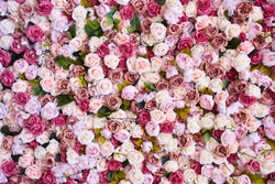 Different shades of pink and red color background of roses. floral pattern.