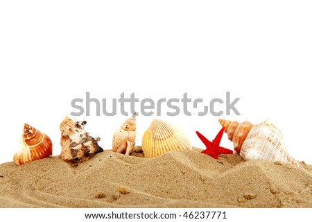 different shells in sand at the beach