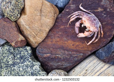 Stock photo of different size coloful stones at seaside, plus one dead crab. Photographed in Norway.