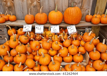 different size pumpkins with price tags