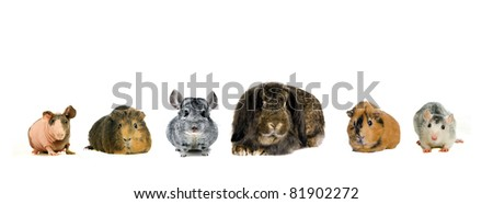 Different spieces of rodents