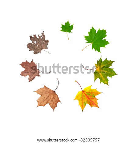 Different stages of life of a leaf symbolising the human life. Placed in circle, isolated on white