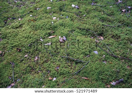 Different textures of the forest floor. Natural scenes background. Forest moss and lichen.