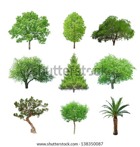 different tree set isolated on white #138350087