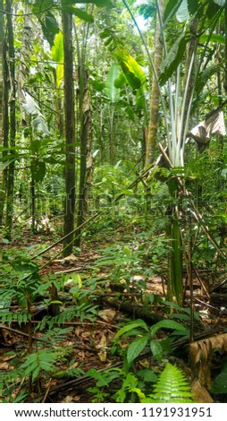 different trees and plants at the amazon rainforest in colombia #1191931951