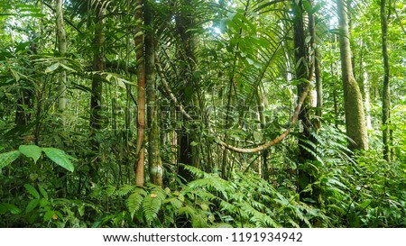 different trees and plants at the amazon rainforest in colombia