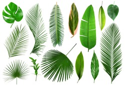 Different tropical leaves on white background