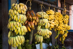 Different types of bananas hang on the counter on branches - the main product in the Indian market. Green bananas on the truck. India, Kerala, non-tourist market