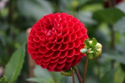 different types of dahlias in a park in autumn