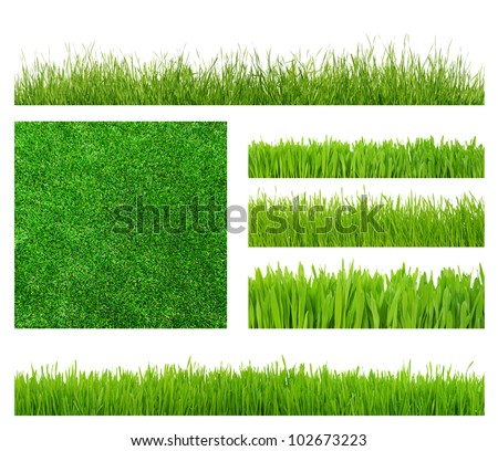 Different types of green grass