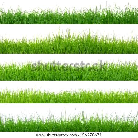 Different types of green grass  - Shutterstock ID 156270671