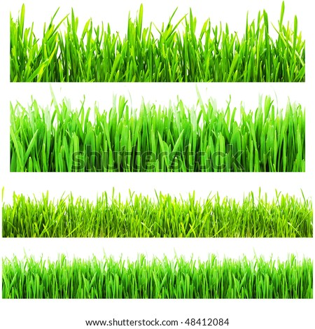 Different types of green grass isolated on a white background