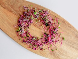 Different types of micro greens on white background. Healthy eating concept of fresh garden produce organically grown as a symbol of health and vitamins from nature. Microgreens closeup. Heap