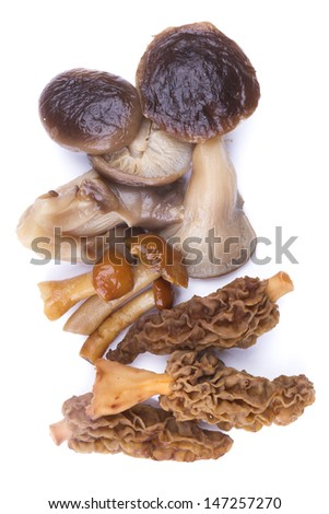 Different types of mushrooms isolated in white