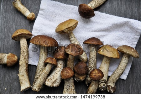 Different variants of compositions with mushrooms  #1474199738