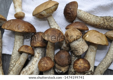 Different variants of compositions with mushrooms  #1474199741