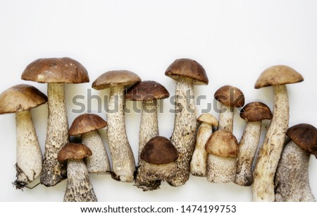 Different variants of compositions with mushrooms  #1474199753