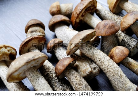 Different variants of compositions with mushrooms  #1474199759