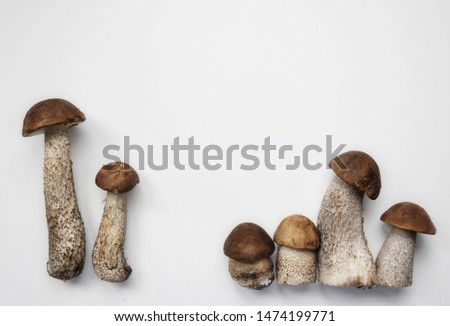 Different variants of compositions with mushrooms  #1474199771