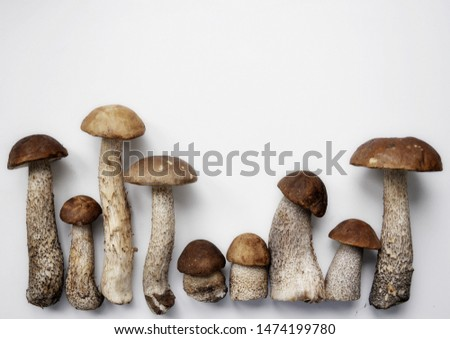 Different variants of compositions with mushrooms  #1474199780