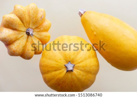 Different varieties and types of pumpkins