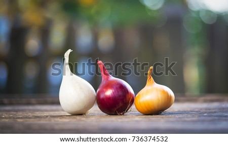 different varieties of onions #736374532