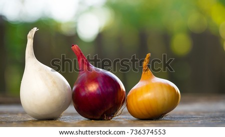 different varieties of onions