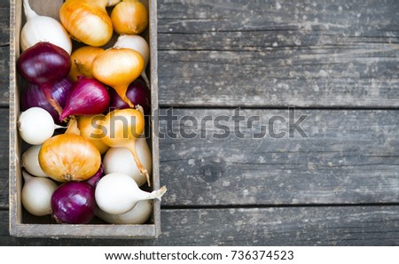 different varieties of onions in a tree box #736374523