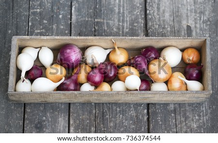 different varieties of onions in a tree box #736374544