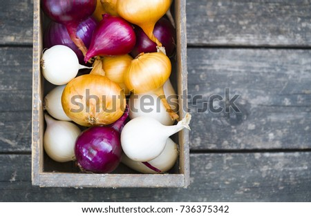 different varieties of onions in a tree box #736375342