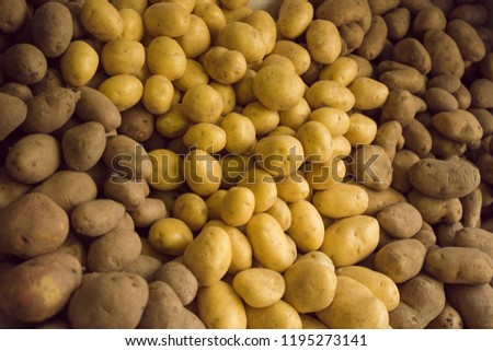 Different varieties of potatoes in a shelf in a grocery store. Potato food texture, vegetables on a pile in the store. #1195273141
