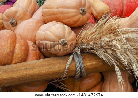 Different varieties of pumpkins and a bouquet of cereal ears on a wooden cart, rustic still life. Ripe vegetables and cereals, autumn harvest. Halloween characters