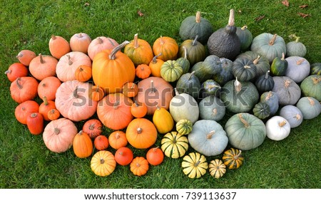 Different varieties of pumpkins and squashes on grass. Autumn collection #739113637