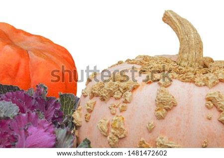 Different varieties of pumpkins (cucurbita pepo), isolated on white. Concept, ripe vegetables, autumn harvest. Halloween characters
