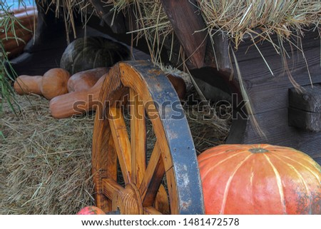 Different varieties of pumpkins on straw, next to the wheel of a wooden cart, rustic still life. Ripe vegetables, autumn harvest. Halloween characters